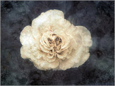 Gallery print  White rose superimposed with floral texture - Alaya Gadeh