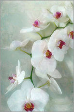 Gallery Print  Composition of a white orchid with transparent texture - Alaya Gadeh