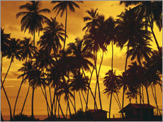 Gallery print  Beach huts under the palm trees - Thonig