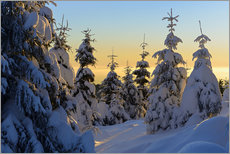 Wall Sticker  Snow-covered spruce trees at sunrise on Wurmberg in the Harz - Andreas Vitting
