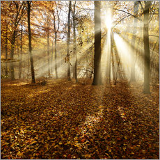 Gallery print  Sunrays and morning fog - Andreas Vitting