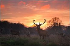 Gallery print  Deer in Richmond Park - Alex Saberi