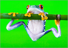 Wall sticker  Colorful Frog on Green Background