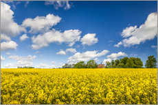 Gallery Print  Spring in yellow and blue on Bornholm - Christian Müringer