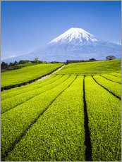 Wall Stickers  Tea Plantation and Mount Fuji in Shizuoka, Japan - Jan Christopher Becke