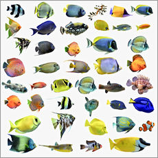 Wall Stickers  Fishes of the sea