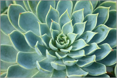 Gallery print  Magnificent succulent