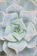 Wall sticker  Pale green succulent plant