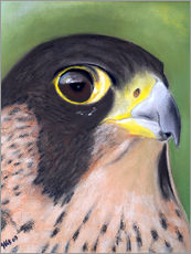 Wall Sticker  Attentive Peregrine Falcon - Monica Schwarz