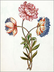 Gallery print  Bouquet of Anemones - French School