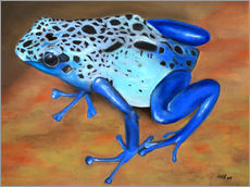 Wall sticker  poison dart frog - Monica Schwarz