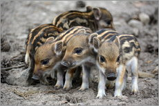 Wall sticker  Wild boar piglets - GUGIGEI