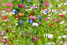 Gallery Print  Flower meadow  - fotoping