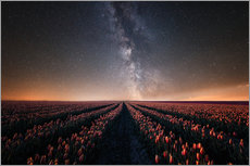 Wall sticker  Tulip field and Milky Way - Oliver Henze