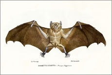 Gallery print  Egyptian Fruit Bat - Raimundo Petraroja