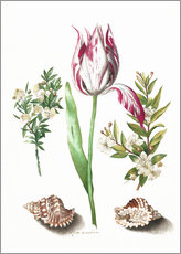 Wall sticker  Tulip with two myrtle branches and two shells - Maria Sibylla Merian