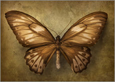 Wall sticker  Brown butterfly - Elena Schweitzer