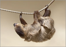 Wall sticker Sloth