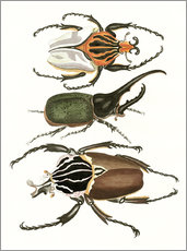 Wall sticker  Large and rare beetles - German School
