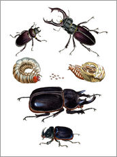 Gallery print  Strange beetles - German School