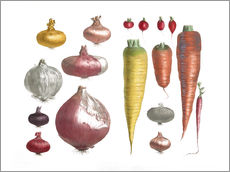 Gallery print  Various Vegetables, including onions and carrots - E. Champin and Mlle. Coutance