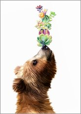 Wall sticker  Succulent Bear - Mandy Reinmuth