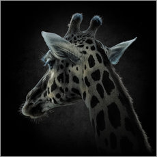 Gallery Print  Animal Life - Mario Benz