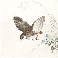 Gallery Print  Quail in Flight - Ohara Koson