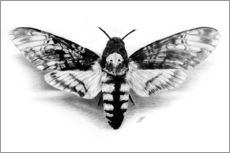 Wall sticker  Death Head Hawk Moth - Christian Klute