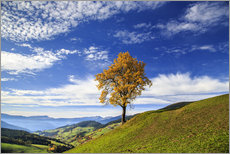 Gallery print  Isolated tree in autumn, Funes Valley, South Tyrol, Italy - Roberto Sysa Moiola