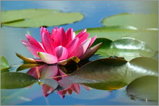 Wall sticker  Water lily with reflection - GUGIGEI