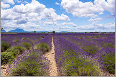 Wall sticker  Lavender field on the Plateau de Valensole in Provence - Thomas Klee