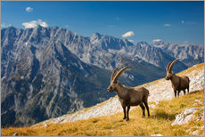 Wall sticker  Two Alpine Ibex in front of Mount Watzmann - Dieter Meyrl