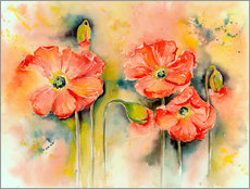 Wall sticker  Mohn - Jitka Krause