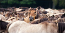 Gallery print  Wild Horse Herd - Friedhelm Peters