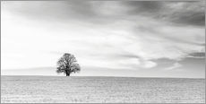 Gallery print  LONELY TREES - Friedhelm Peters