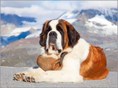 Wall sticker  Saint Bernard Rescue Dog