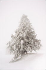 Wall sticker  Single snow covered tree in thick fog in winter  Rigi, Switzerland - Peter Wey