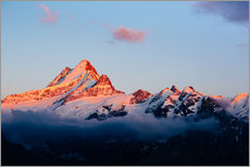 Wall sticker  Schreckhorn alpen glow at sunset  View from First, Grindelwald, Switzerland  - Peter Wey