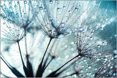 Wall sticker Dandelion blue art