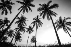 Gallery print  Silhouettes of palm trees