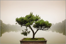Gallery print  Japanese bonsai in zen garden