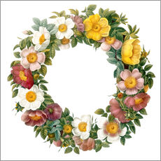 Wall sticker Wreath of wild roses