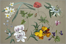 Wall sticker  Flower studies - Adolf Senff
