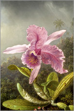 Gallery print  Hummingbird and orchid (detail) - Martin Johnson Heade