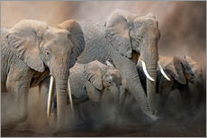 Gallery print  A group of elephants - Peter Roder