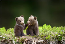 Wall sticker  Two young brown bears