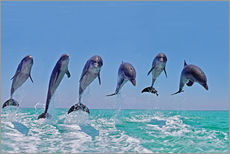 Gallery print  6 dolphins jump out of the water - Gérard Lacz