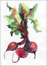 Gallery Print  Radish watercolor
