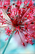 Wall sticker Allium pink